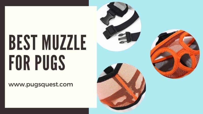 best muzzle for pugs