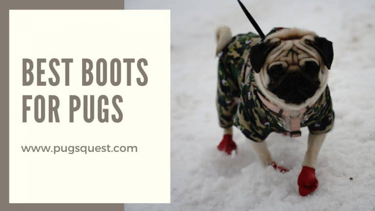 best boots for pugs
