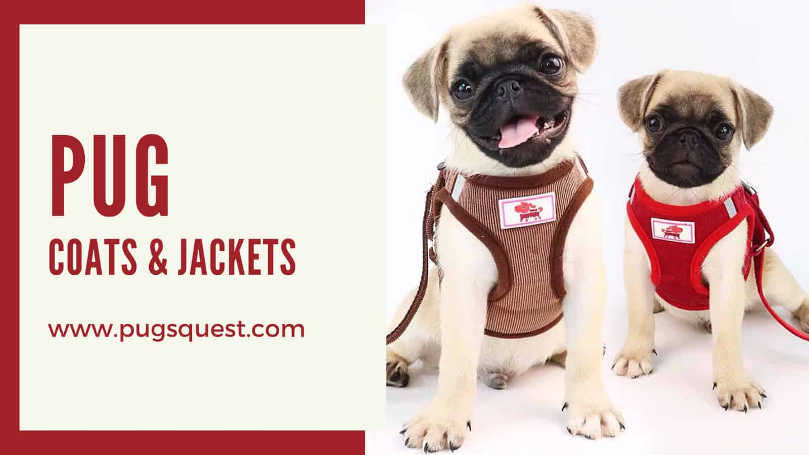 pug coats and jackets