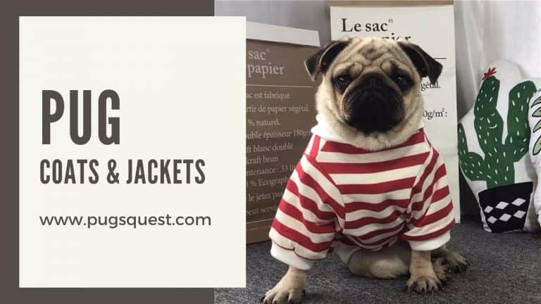 pug clothes