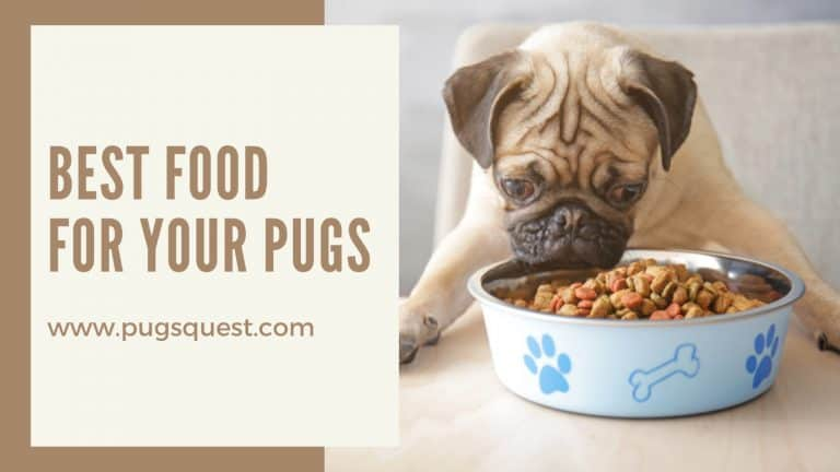 best food for pugs
