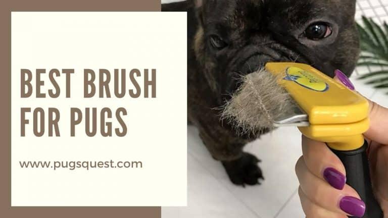 best brush for pugs