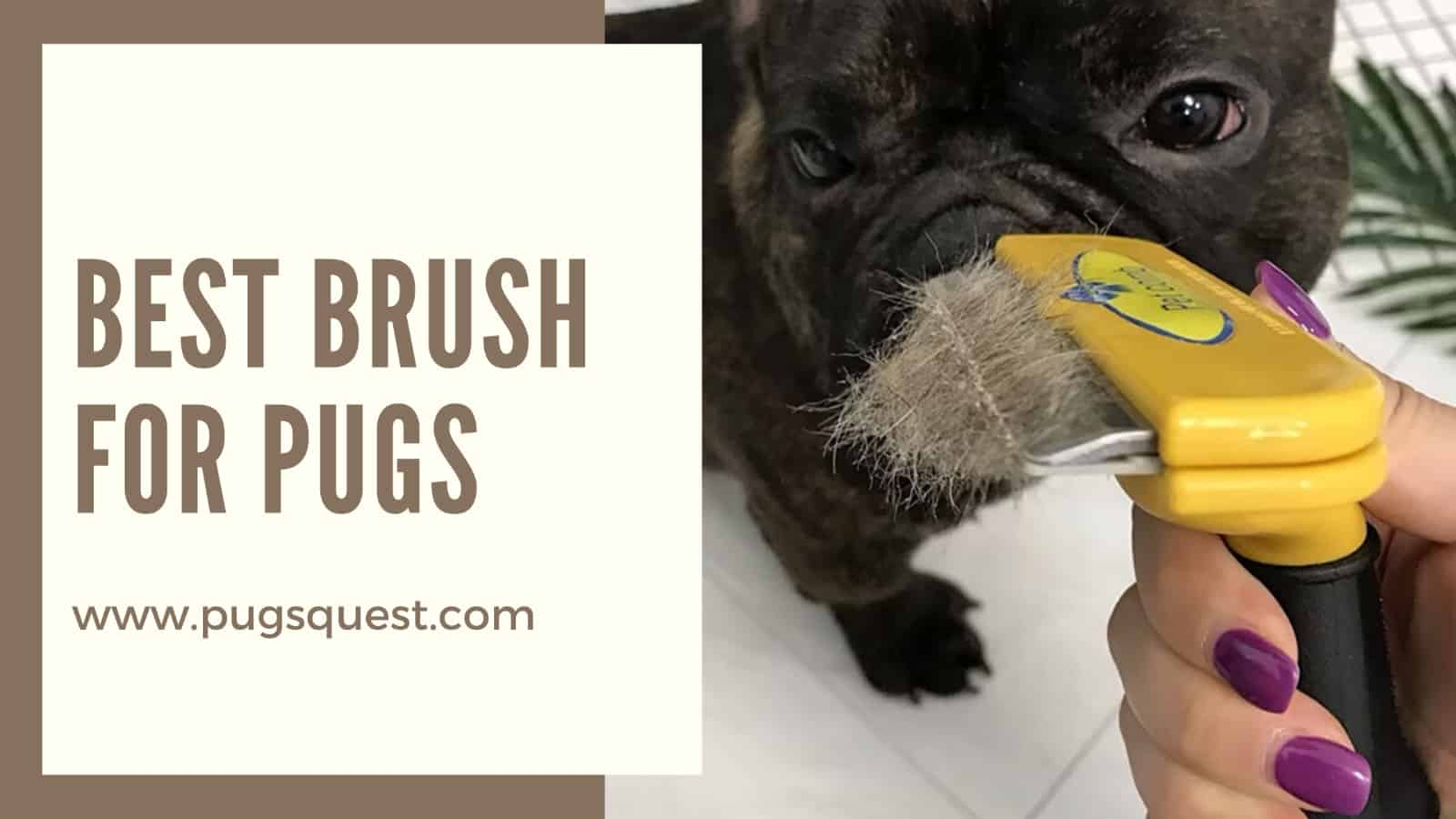 best brush for pugs