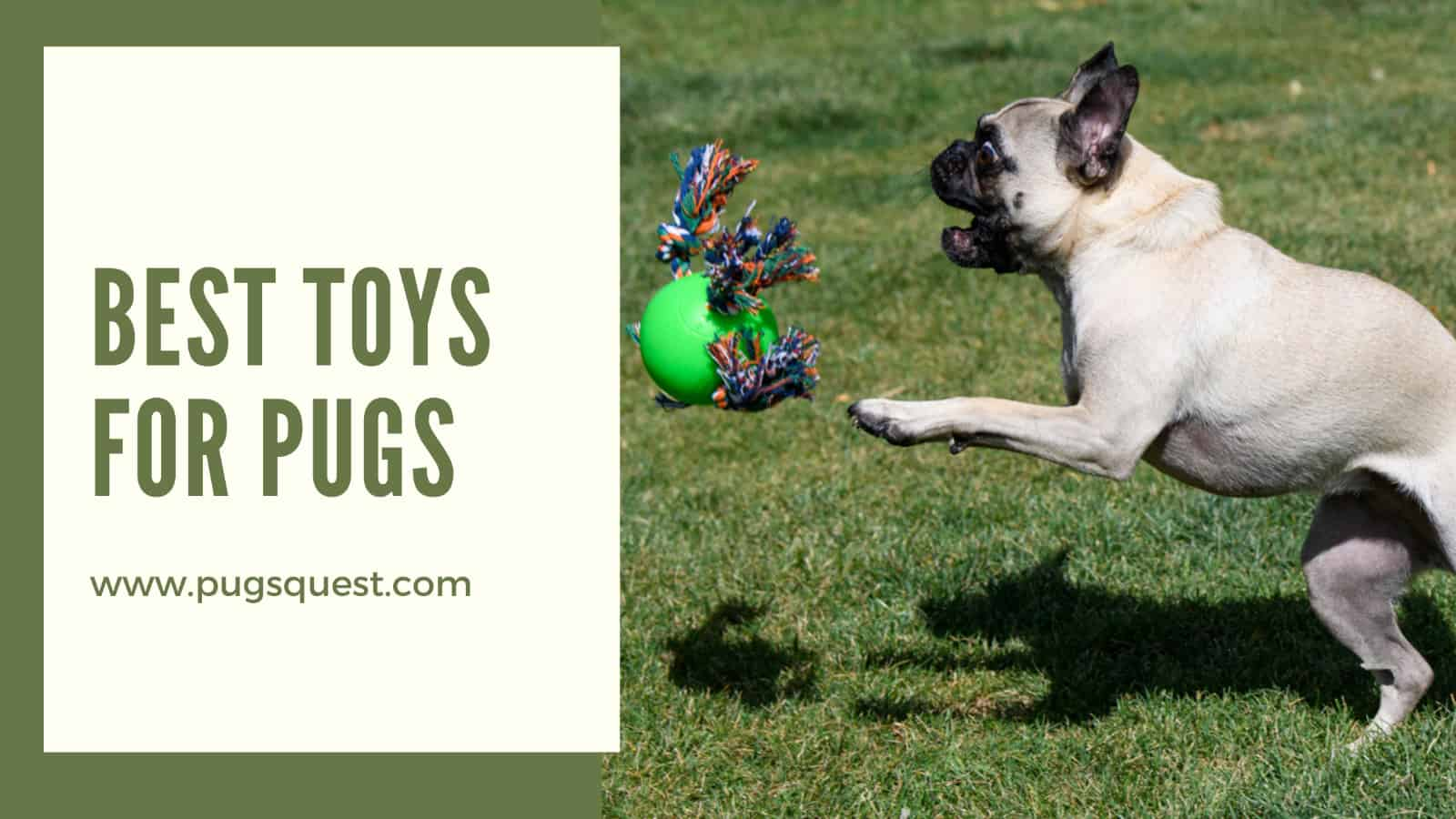 best toys for pugs