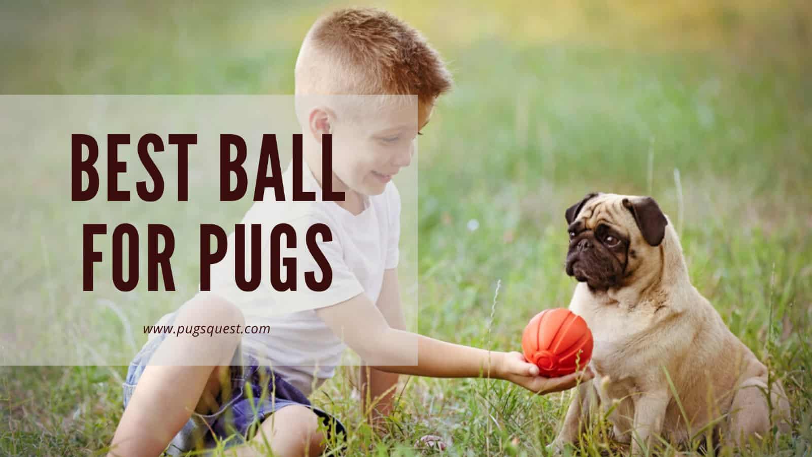best ball toys for pugs