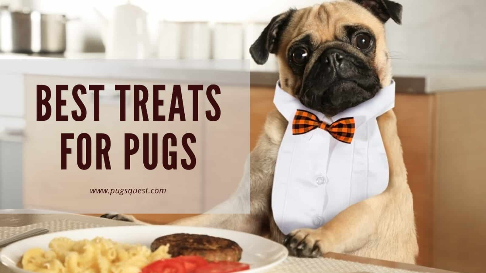 best treats for pugs