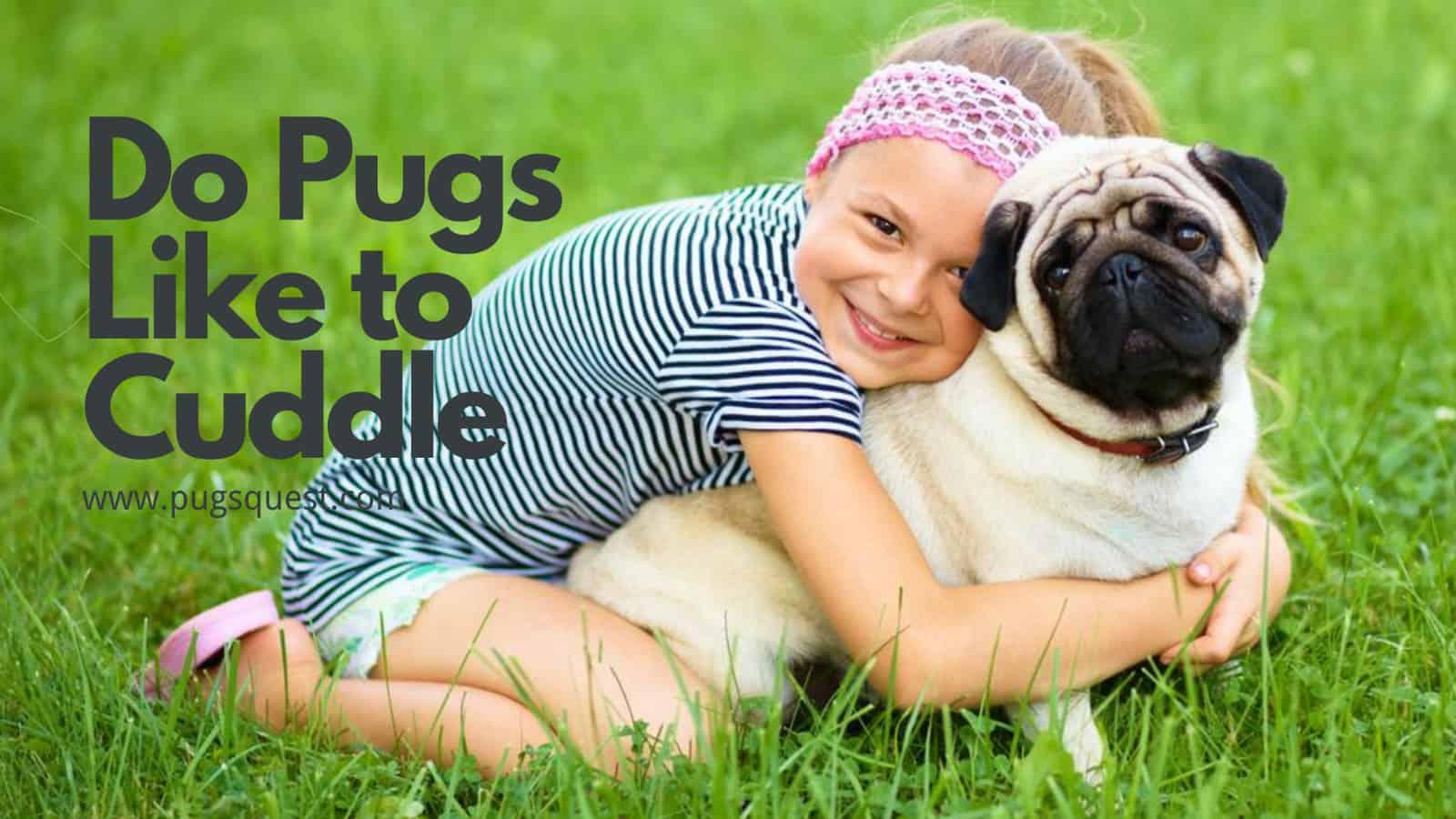 do pugs like to cuddle