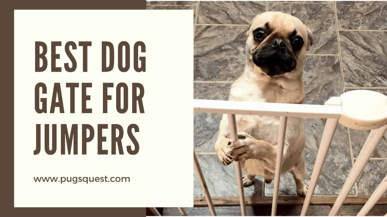 Best Dog Gate for Jumpers