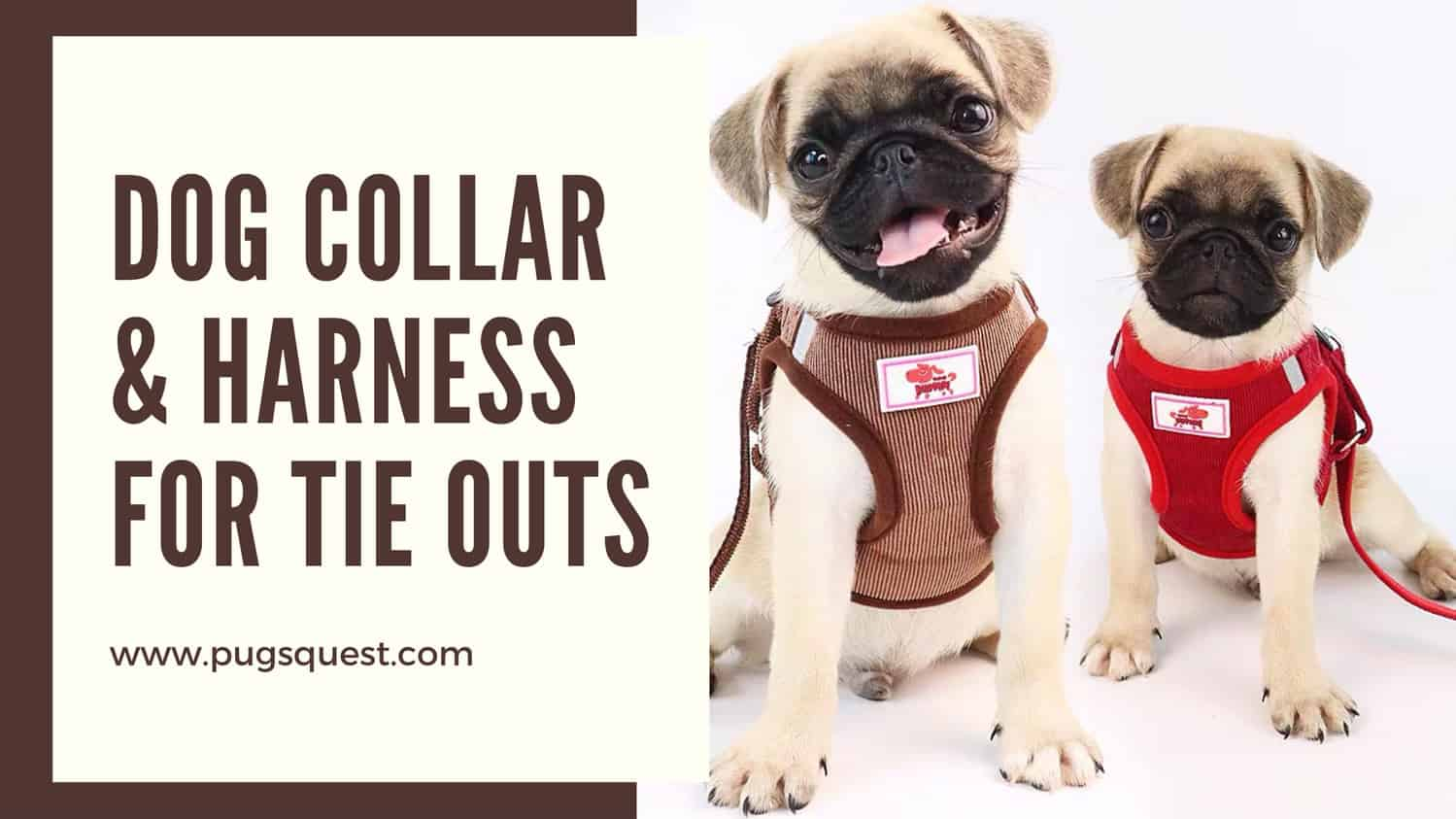 dog collar & harness for tie outs