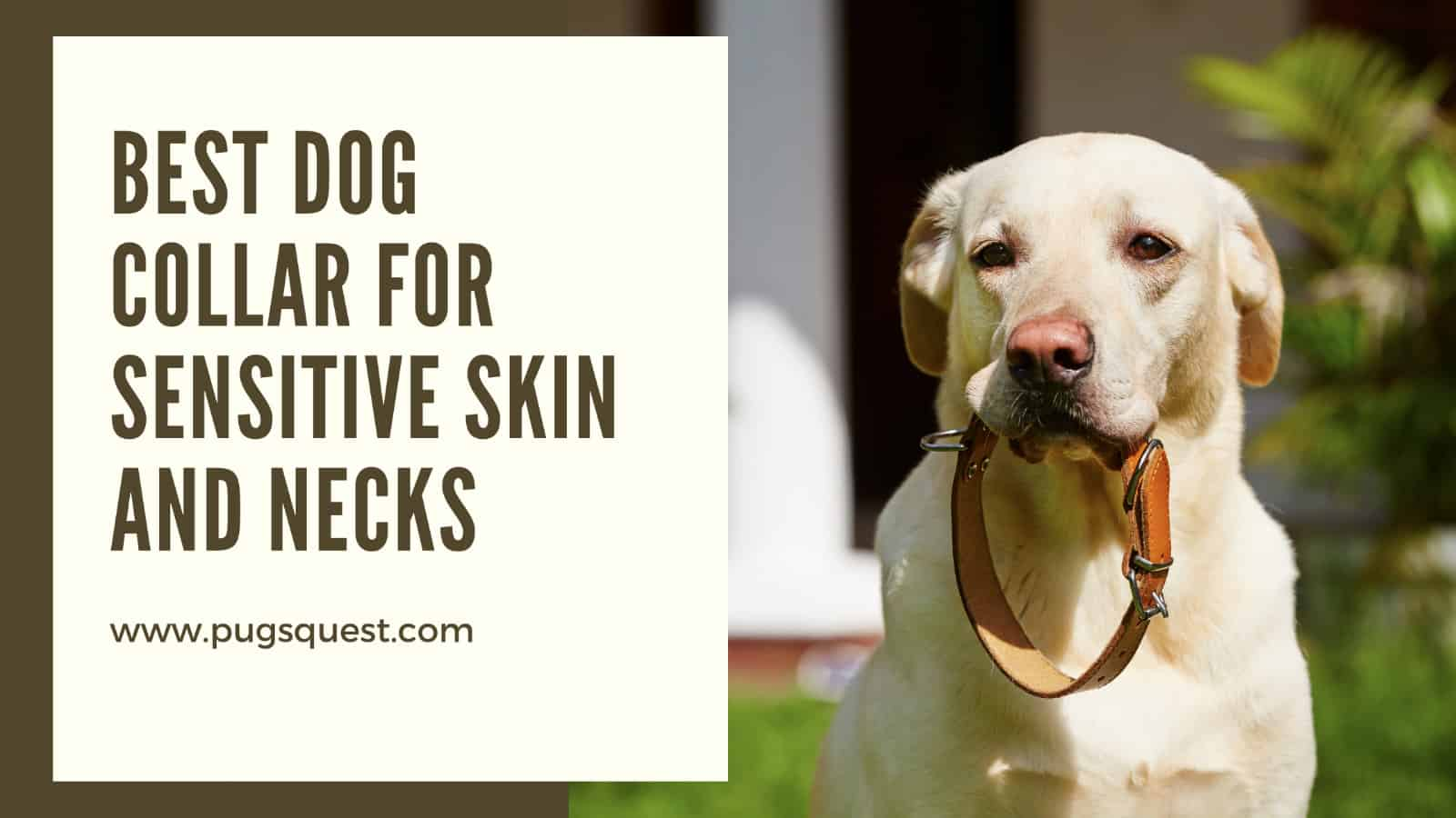 Best Dog Collar for Sensitive Skin and Necks